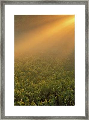 Usa, Michigan, Meadow Of Goldenrod Framed Print