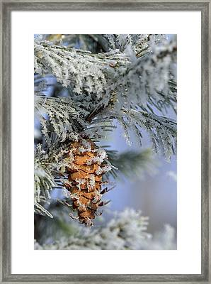 Usa, Michigan, Morning Light On Balsam Framed Print
