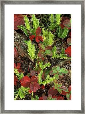 Usa, Michigan, Upper Peninsula, Club Framed Print by Jaynes Gallery