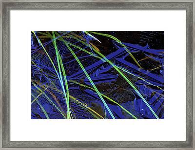 Usa, Michigan, Upper Peninsula, Sedge Framed Print by Jaynes Gallery