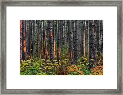 Usa, Minnesota, Lake Itasca, Itasca Framed Print by Peter Hawkins