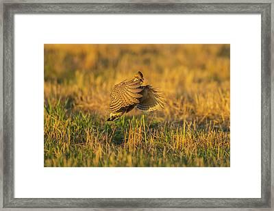 Usa, Nebraska, Sand Hills Framed Print