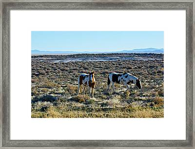 Usa, Nevada, Wild Horses Grazing Framed Print by Bernard Friel