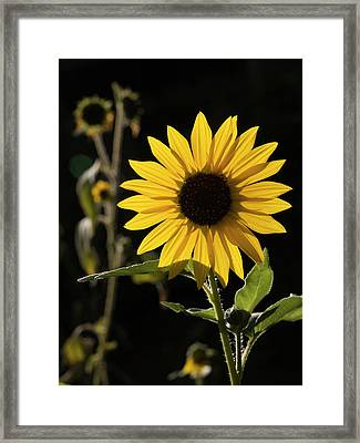Usa, New Mexico, Santa Fe Framed Print by Ann Collins