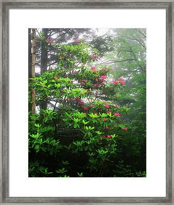 Usa, North Carolina, View Of Great Framed Print by Adam Jones