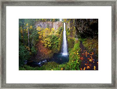 Usa, Oregon A Bigleaf Maple Leaves Framed Print