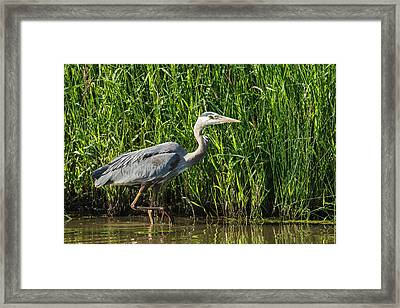 Usa, Oregon, Baskett Slough National Framed Print