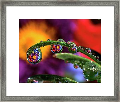 Usa, Oregon, Close-up Abstract Framed Print by Jaynes Gallery