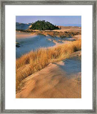 Usa, Oregon, Dunes National Recreation Framed Print by Jaynes Gallery