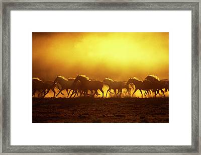Usa, Oregon, Harney County, Wild Kiger Framed Print by Jaynes Gallery