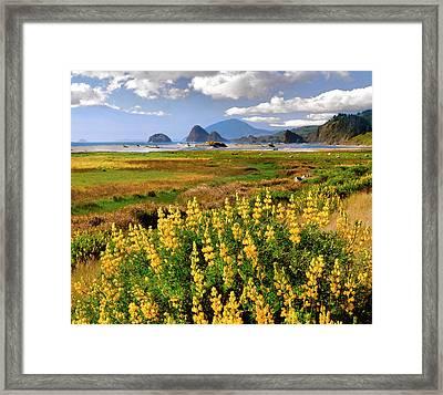 Usa, Oregon Landscape Of Yellow Lupine Framed Print