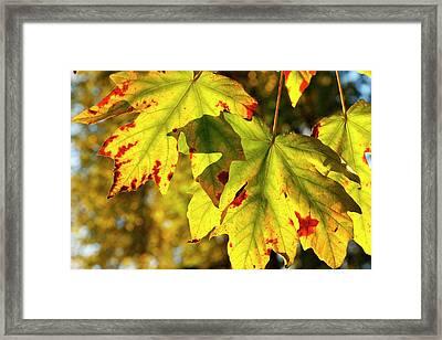 Usa, Oregon, Larwood Wayside, Fall Framed Print