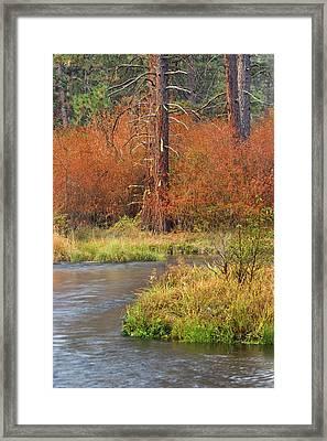 Usa, Oregon, Metolius River Framed Print