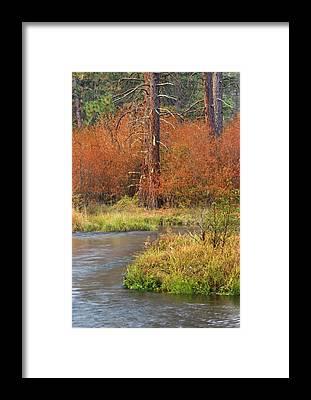 Don-trout Framed Prints