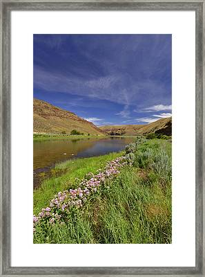 Usa, Oregon Milkweed Along The John Day Framed Print by Jaynes Gallery