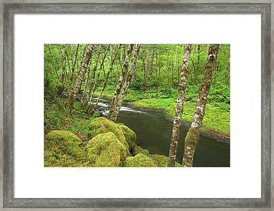 Usa, Oregon, Nestucca River Framed Print by Jaynes Gallery