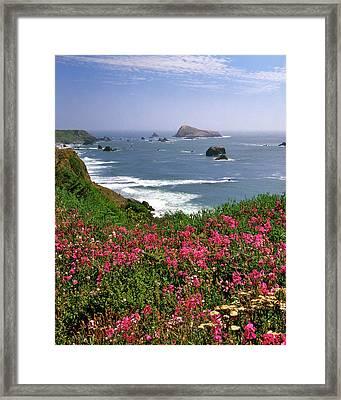 Usa, Oregon Ocean Landscape Of Goat Framed Print by Jaynes Gallery