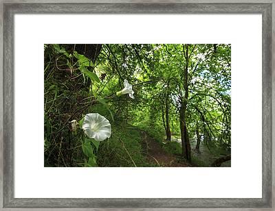 Usa, Oregon, Portland, Oak Bottoms Framed Print by Rick A Brown