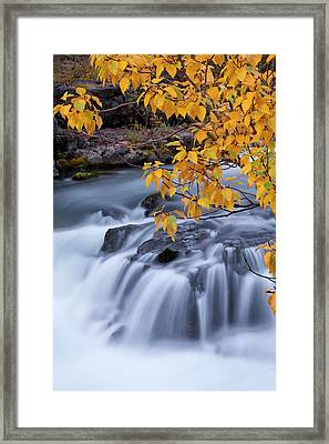 Usa, Oregon Rogue River Waterfalls Framed Print by Jaynes Gallery