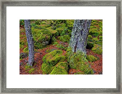 Usa, Oregon, Rogue River Wilderness Framed Print by Jaynes Gallery