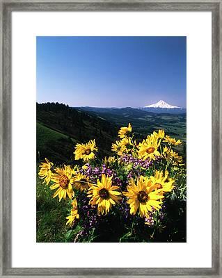 Usa, Oregon, View Of Blue-pod Lupine Framed Print by Stuart Westmorland
