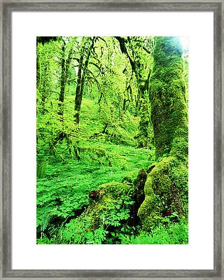 Usa, Oregon, View Of Lush Trees Framed Print by Stuart Westmorland