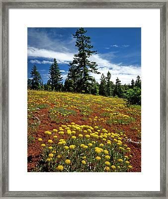 Usa, Oregon, Wallowa-whitman National Framed Print by Jaynes Gallery