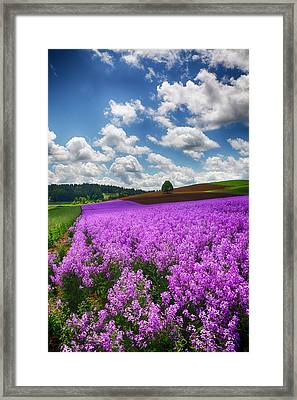 Usa, Oregon, Willamette Valley, Farming Framed Print