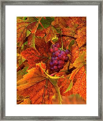 Usa, Oregon, Willamette Valley, Pinot Framed Print by Jaynes Gallery