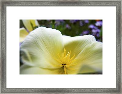 Usa, Oregon, Willamette Valley Framed Print by Terry Eggers