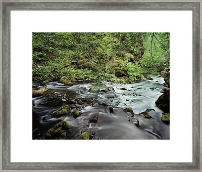 Usa, Pacific Northwest, A Stream Flows Framed Print