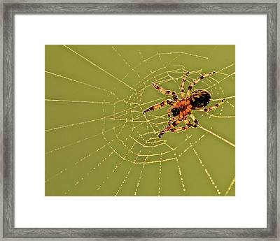 Usa, Pennsylvania, Churchville Nature Framed Print by Jaynes Gallery