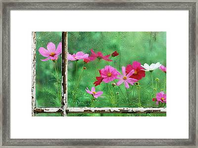 Usa, Pennsylvania, Cosmos In Rainy Framed Print