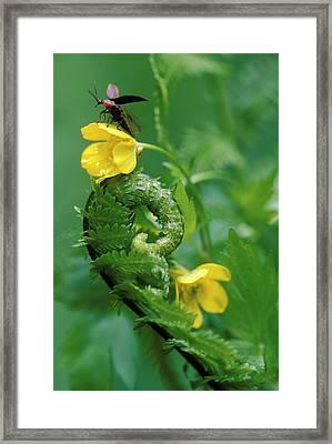 Usa, Pennsylvania, Lightning Bug Taking Framed Print by Jaynes Gallery