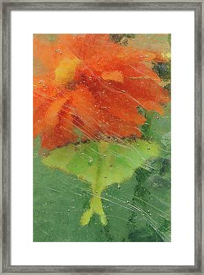 Usa, Pennsylvania, Luna Moth On Orange Framed Print