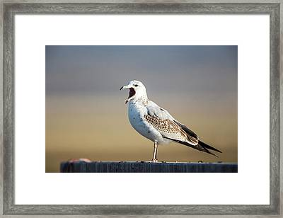Usa, Red Rock Lakes National Wildlife Framed Print
