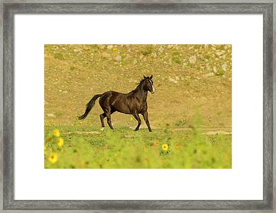 Usa, South Dakota, Wild Horse Sanctuary Framed Print