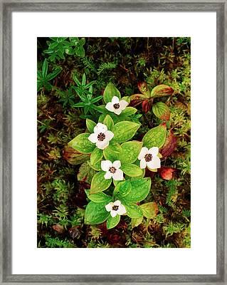Usa, Southeast Alaska, Tongass National Framed Print