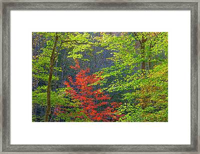 Usa, Tennessee Autumn Foliage Framed Print by Jaynes Gallery
