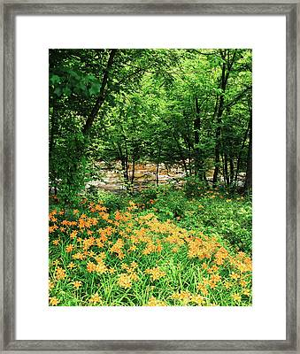 Usa, Tennessee, Great Smoky Mountains Framed Print by Adam Jones