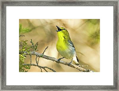 Usa, Texas, Balcones Canyon Nwr Framed Print
