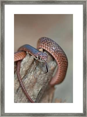 Usa, Texas, Boykin Springs Framed Print by Jaynes Gallery