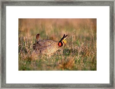 Usa, Texas, Canadian Framed Print