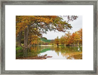 Usa, Texas, Cypress Tree With Golden Framed Print by Westend61
