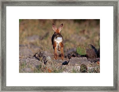 Usa, Texas, Kimble County Framed Print by Jaynes Gallery