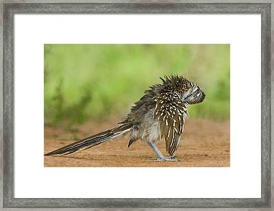 Usa, Texas, Rio Grande Valley Framed Print by Jaynes Gallery