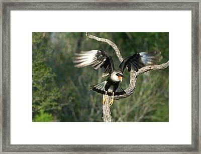 Usa, Texas, Rio Grande Valley, Starr Framed Print by Jaynes Gallery