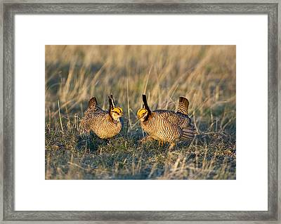 Usa, Texas, Texas Panhandle, Canadian Framed Print by Jaynes Gallery