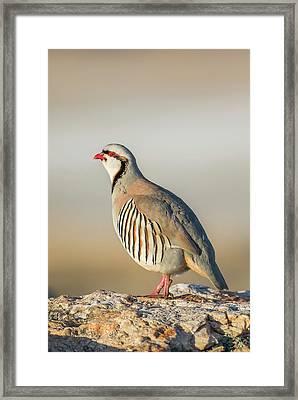 Usa, Utah, Antelope Island State Park Framed Print