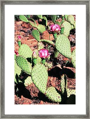Usa, Utah, Zion National Park, Cactus Framed Print
